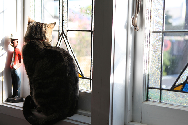 Morning-Cat